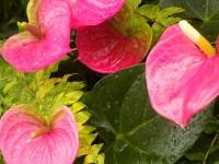 阴雨天的春日避所