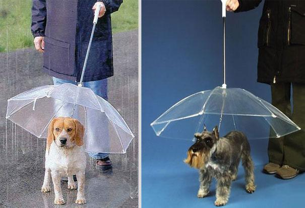 http://www.amazon.com/Pet-Umbrella-Keeps-your-Comfotable/dp/B000T0JUE8/ref=pd_sim_sbs_petsupplies_2?ie=UTF8&refRID=05E042WC76DB5XSEDPK5