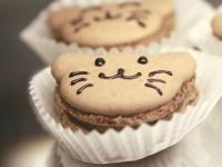 关于西雅图的第一家猫咪咖啡馆:不可不知的二三事