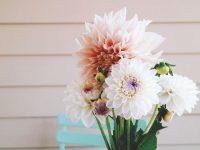 這些花絕了!編輯部組織的助農活動:大麗花繡球花來啦